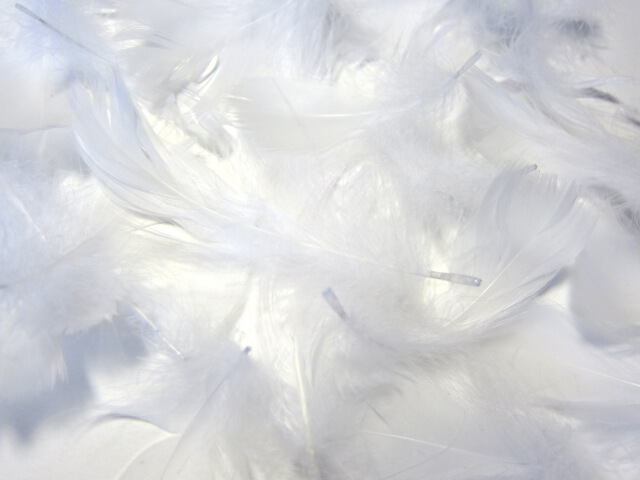 羽毛の画像