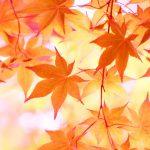秋らしいオシャレな配色は?レースやチェック柄アイテムと合わせるのがオススメ